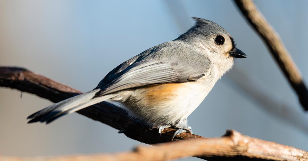 Audubon Bird in Arlington, TX